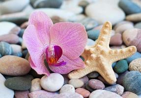 pierres de plage