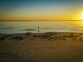 aigrette solitaire au coucher du soleil