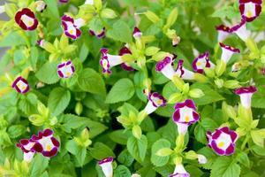 jolie fleur violette sur le terrain photo