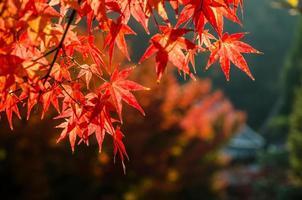 saison des feuilles d'automne colorées au japon
