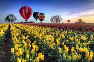 Ballons à air chaud sur champ de tulipes
