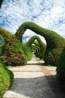 jardin d'arcs de genévrier sculpté photo