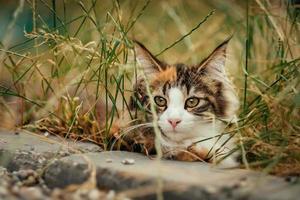 chat se cachant dans l'herbe photo