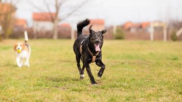 Heureux chien de race mixte jouant dans le jardin photo