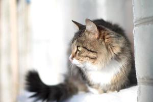 Beau chat moelleux sur un rebord de fenêtre en hiver photo