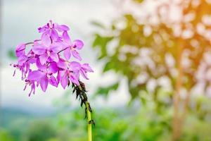 fleur violette dans un jardin