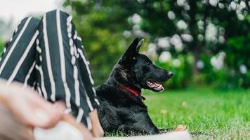 Chien noir à poil court au parc