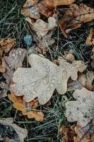 Feuilles brunes humides sur l'herbe verte