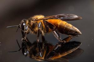 abeille sur le miroir