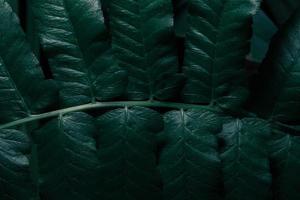 feuilles vertes, fond sombre photo
