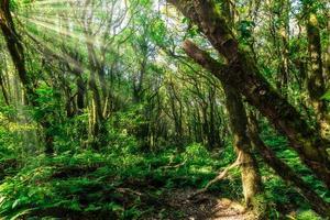 arbres dans la forêt photo