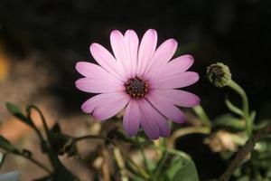 fleurs sauvages qui brillent au soleil photo