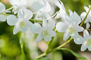 Orchidées exotiques poussant sur l'île de bali photo