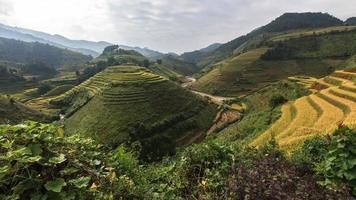 belles rizières en terrasses, asie du sud-est