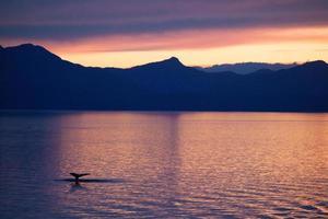 silhouette de baleine photo