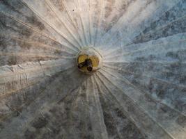 parapluie en papier de riz séché dans la nature photo