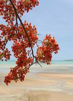 Arbre tropical et plage de sable, Territoire du Nord, Australie