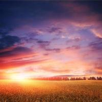 coucher de soleil sur un champ de blé avec des nuages incroyables