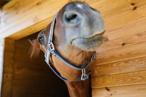 nez de cheval se bouchent