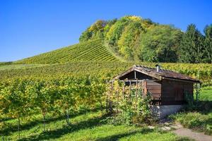 cabane dans le vignoble