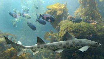requin photo