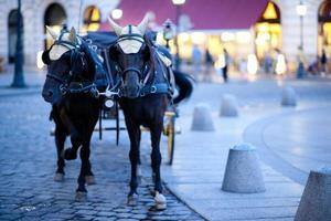 la carrozza con i cavalli photo