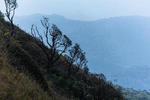 arbres à kew mae pan, thaïlande