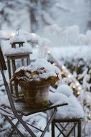 plante couverte de neige photo