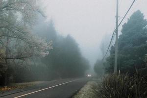 Route en béton gris entre les arbres verts couverts de brouillard