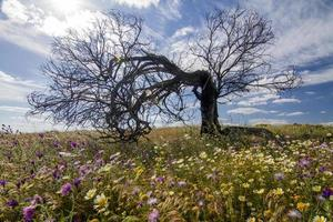 Collines de la campagne de l'Algarve avec buissons jaunes