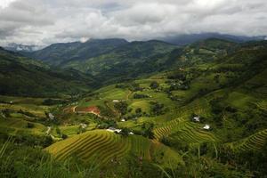champs en terrasses à hoang su phi, ha giang, vietnam.