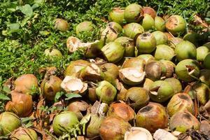 Tas de coques de noix de coco jetées photo
