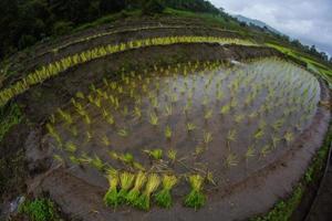 terrain de terrasse agricole.
