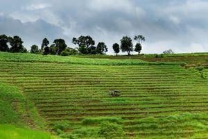 belle terrasse de rizière. photo