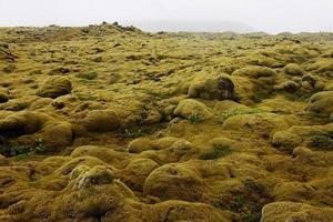 Champ de lave eldhraun dans le sud de l'Islande