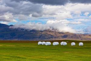 Rouleaux de foin blanc au champ vert de l'Islande