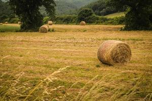 Rouleaux d'herbe en Toscane Italie