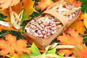 haricots érable récolte d'automne photo