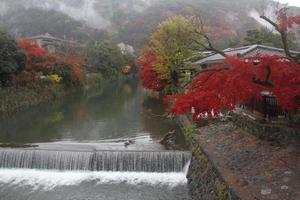 érable, japon, rivière, arashiyama, automne