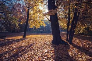 Parc d'automne coloré le matin ensoleillé à Cracovie, Pologne