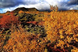 mousse d'Islande photo