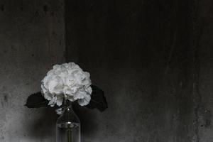 Photo en gros plan d'un arrangement de fleurs pétales blanches