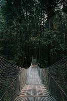 pont suspendu dans la forêt
