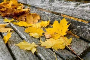 feuilles d'érable sur banc en bois photo