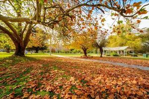 feuilles dorées dans un parc