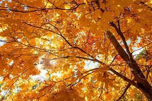 feuilles jaunes. photo