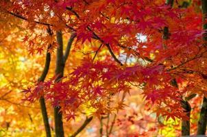 automne coloré, fond de feuille rouge, orange et or