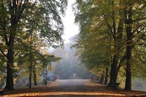 arbres dautomne dans le parc
