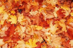 feuilles d'automne jaunes, orange et rouges dans le parc d'automne.