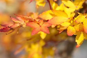 feuilles d'automne orange photo
